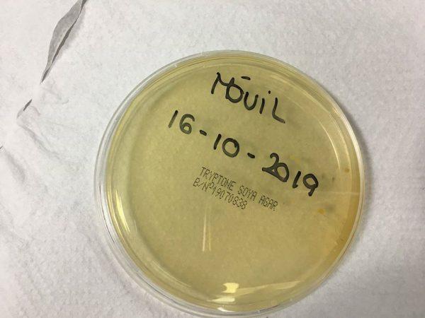 Placa petri con agar agar rotulada